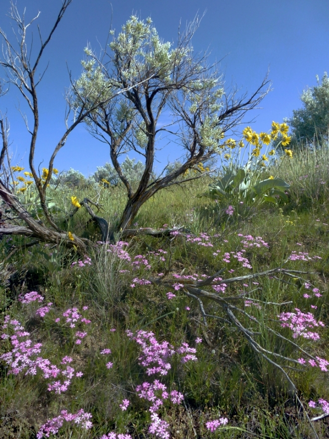 Phlox, balsam & sage 2014 © GaryERichardson